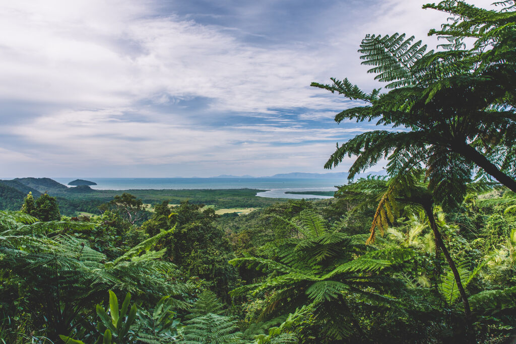 Daintree Rainforest, Mt Alexandra Lookout. Image by Tourism Tropical North Queensland.