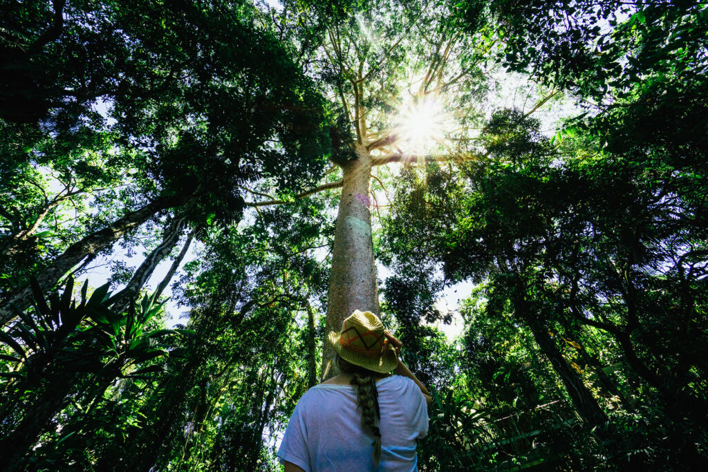 Trees in the Daintree Rainforest. Image by Tourism Tropical North Queensland.